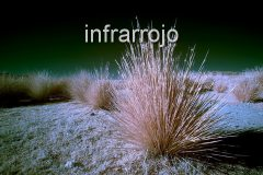 infrarroja
