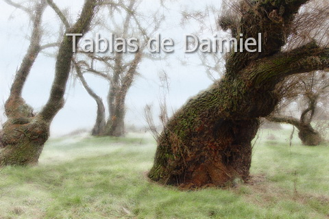Permalink to:… Tablas de Daimiel …
