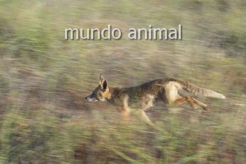 Permalink to:… Mundo animal …