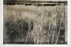 Navaseca en Polaroid IV